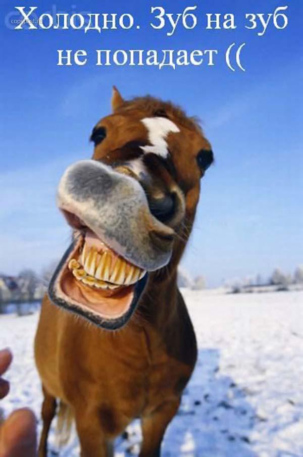 Все радостно встречают с улыбкой этот